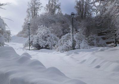 NIEVE Arboles y nieve 01