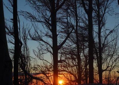 NIEVE Arboles y puesta Sol