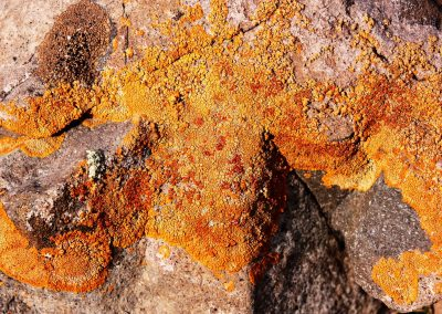 VERANO Liquenes Roca Farellones